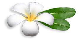 Frangipane d'Asie du Sud-Est, Frangipanier créations d'artisanat d'Asie du Sud-Est