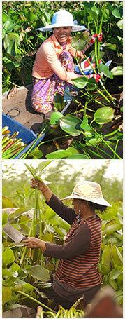 Découvrez les créations d'artisanat en jacinthe d'eau d'Asie du Sud-Est, panier, boîte, corbeille... fabriquées de façon authentique au Cambodge.