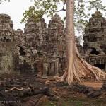 Cambodge image temples de Angkor avec viel arbre. Images et textes proposés par Frangipanier, votre boutique mobile de créations d'artisanat d'Asie du Sud-Est.