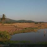 Cambodge image rizières et eau dans les campagnes. Images et textes proposés par Frangipanier, votre boutique mobile de créations d'artisanat d'Asie du Sud-Est.