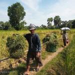 Cambodge image de villageois de retour des champs dans les campagnes. Images et textes proposés par Frangipanier, votre boutique mobile de créations d'artisanat d'Asie du Sud-Est.