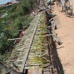 Artisanat équitable des villages du Cambodge, la jacinthe d'eau sèche sur les chemins des bords des villages lacustres pour la préparation de l'artisanat.