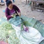 Frangipanier visite village du bambou au Laos - artisanat équitable et authentique - 19