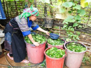 Frangipanier reportage sur la technique du batik chez les H'mong au Vietnam - 30