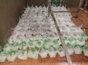 Frangipanier donation riz Laos suite aux inondations automne 2020-13